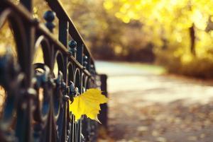 Sapori d'autunno, semplici e dal gusto aromatico