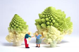 La farmacia dell' orto: rape, broccoli e dintorni