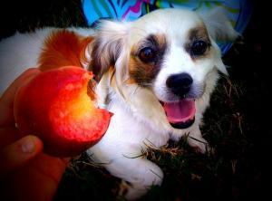 Ricette vegane per cani: il primo libro