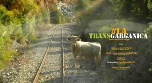 #LA TRANSGARGANICA: SPIRITI TRANSUMANTI IN VIAGGIO VERSO IL SALENTO