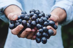 Cosa significa 'prodotto biologico'?