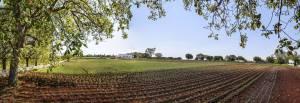 Azienda Agricola Lama Chiara